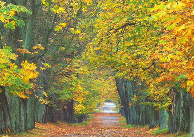 Rügen Herbst